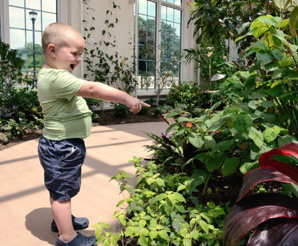 Discovery at Hershey Gardens Butterfly Atrium