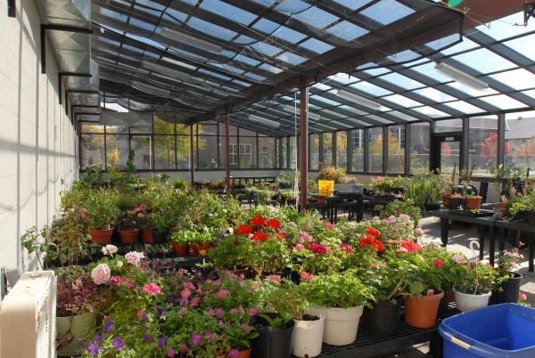 Inside Cottage Grove Greenhouse