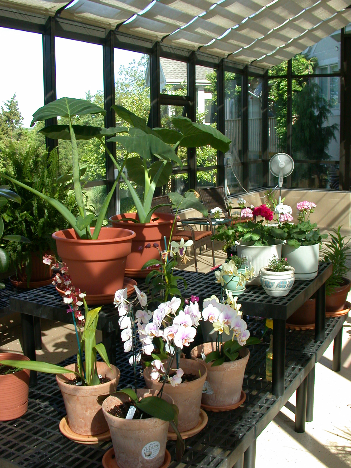 A Home Greenhouse Is A Necessity For Home Growing Enthusiasts